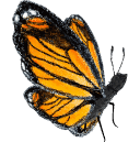 The Queen Monarch Butterfly